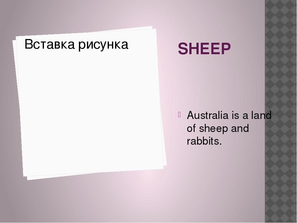 SHEEP Australia is a land of sheep and rabbits.
