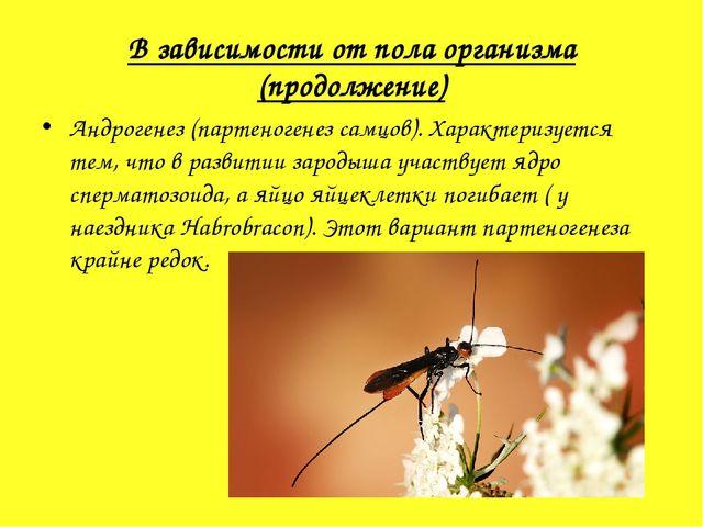 В зависимости от пола организма (продолжение) Андрогенез(партеногенез самцов...