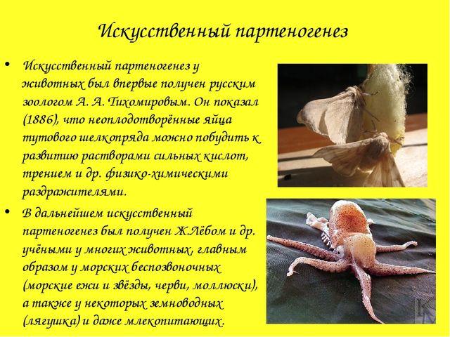 Искусственный партеногенез Искусственный партеногенез у животных был впервые...