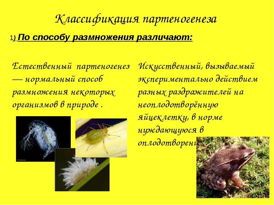 Классификация партеногенеза 1) По способу размножения различают: Искусственны...