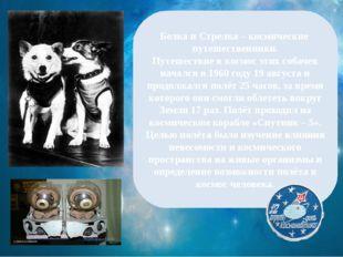 Белка и Стрелка – космические путешественники. Путешествие в космос этих соб