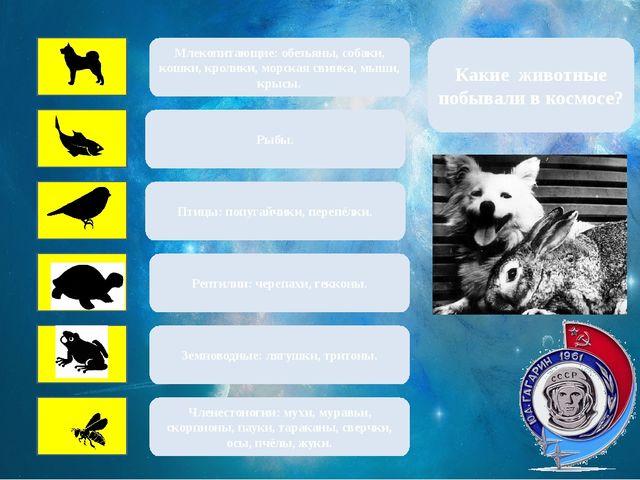 Млекопитающие: обезьяны, собаки, кошки, кролики, морская свинка, мыши, крысы...