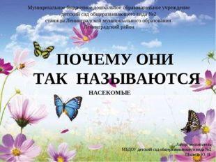 НАСЕКОМЫЕ Автор: воспитатель МБДОУ детский сад общеразвивающего вида №2 Шконд