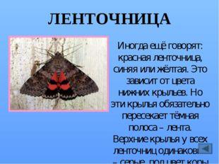 МАХАОН Когда эта бабочка летит, кажется, что она хвостатая. Поэтому в народе