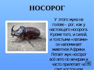 СКАКУН Их много разных видов. Этот жук быстро бегает, может подняться в возду