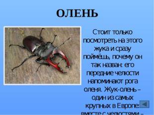 ЗОЛОТОГЛАЗКА Своё название это насекомое получило потому, что её глаза – удив