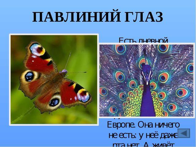 СЛОНИК Голова у этих жуков вытянута и напоминает хоботок. Поэтому их называют...