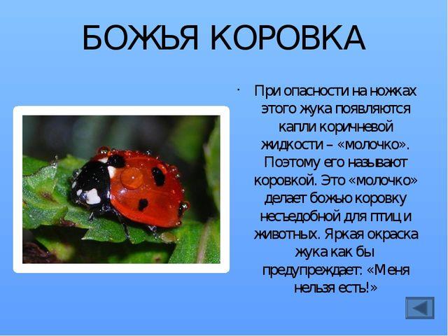 БОМБАРДИР При опасности жук «бомбардирует» врага едкой жидкостью. И это хорош...