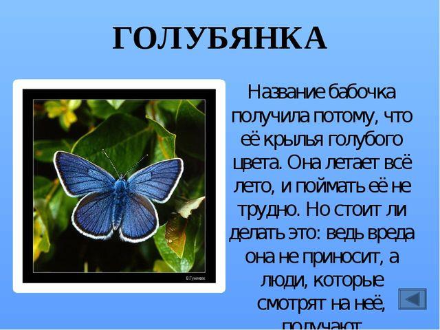 ЕЖИМУХА В отличие от других мух, ежемухи – полезные насекомые. Они не отклады...
