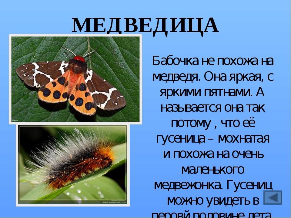 Все о бабочках с картинками