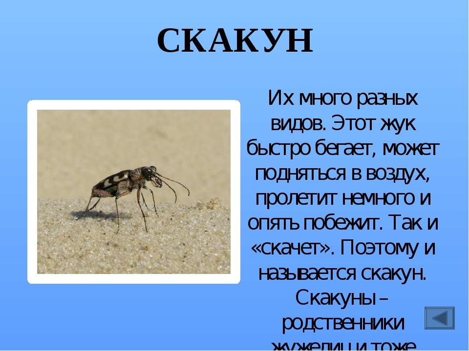 ДРОВОСЕК Их много разных видов, они разной величины, живут в разных местах. Н...