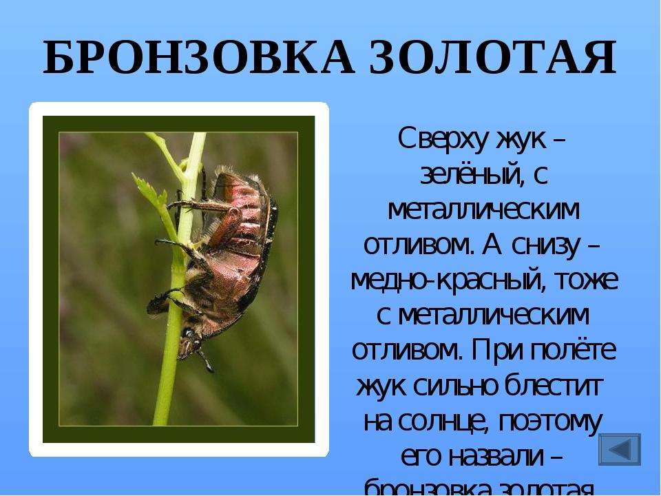 ГОЛУБЯНКА Название бабочка получила потому, что её крылья голубого цвета. Она...