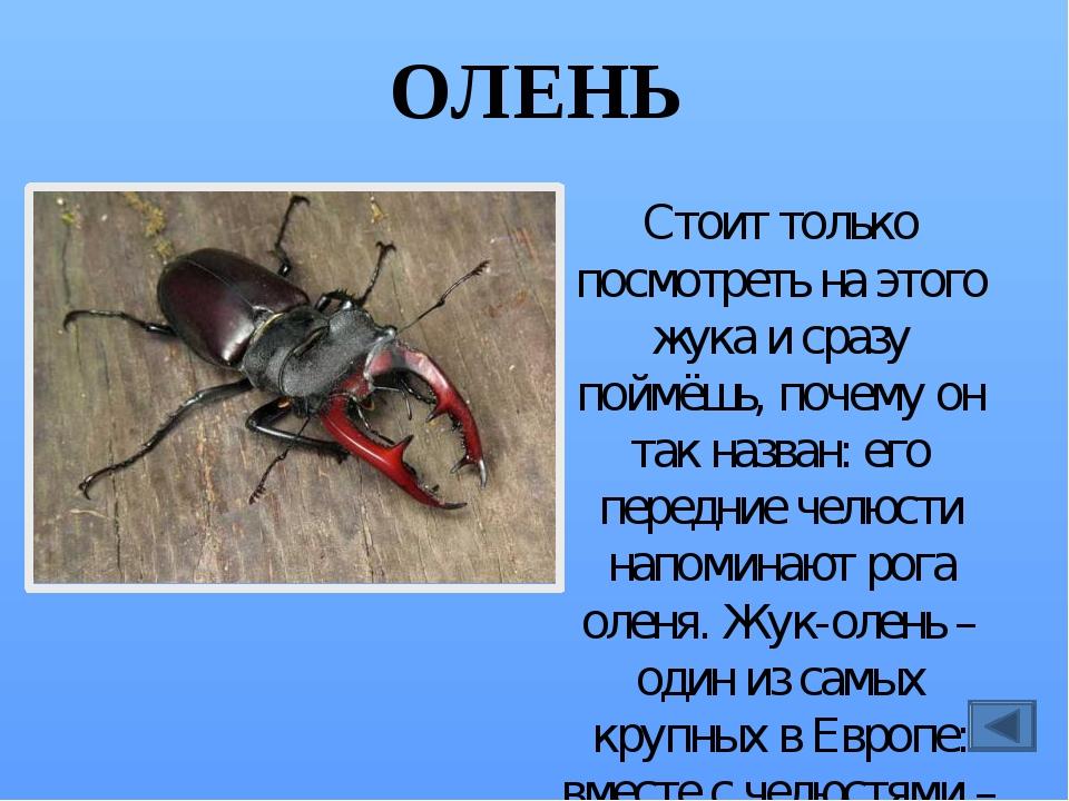 ЗОЛОТОГЛАЗКА Своё название это насекомое получило потому, что её глаза – удив...