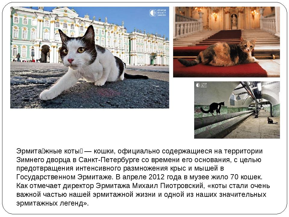 Эрмита́жные коты́— кошки, официально содержащиеся на территории Зимнего двор...