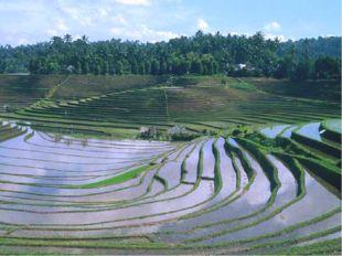 Земледелие Растениеводство – это возделывание культурных растений, в основном