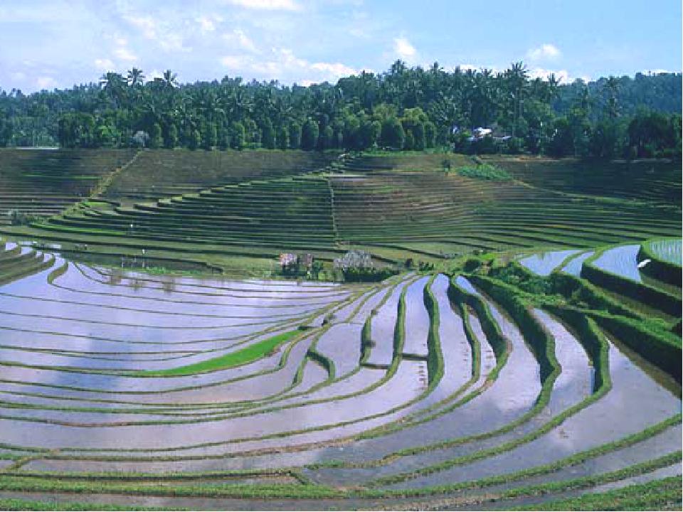 Земледелие Растениеводство – это возделывание культурных растений, в основном...