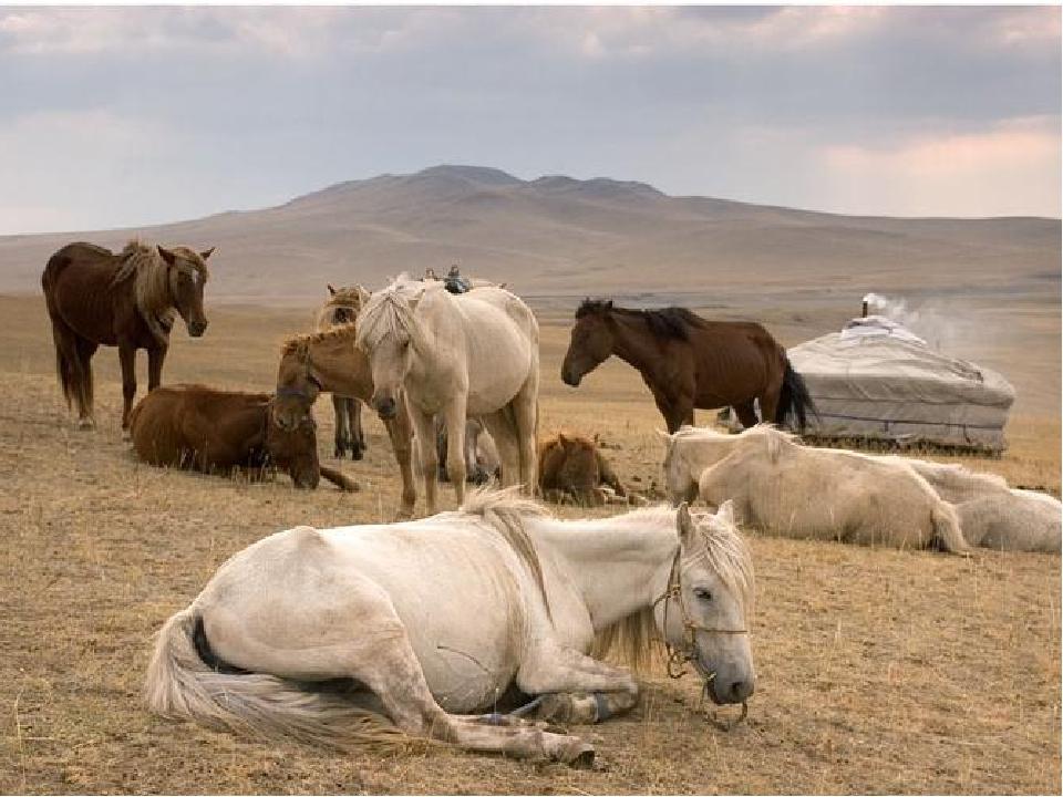 Животноводство Свиноводство 40% всей мясной продукции мира - Китай Крупный ро...