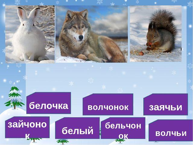 белочка заячьи волчонок белый зайчонок волчьи бельчонок
