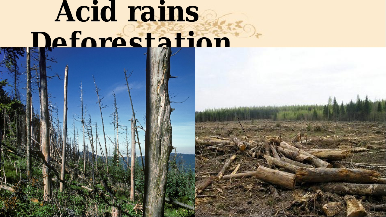 Acid rains Deforestation