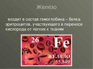 Железо входит в состав гемоглобина – белка эритроцитов, участвующего в перено