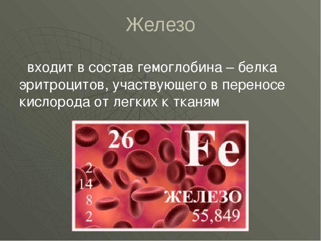 Железо входит в состав гемоглобина – белка эритроцитов, участвующего в перено...