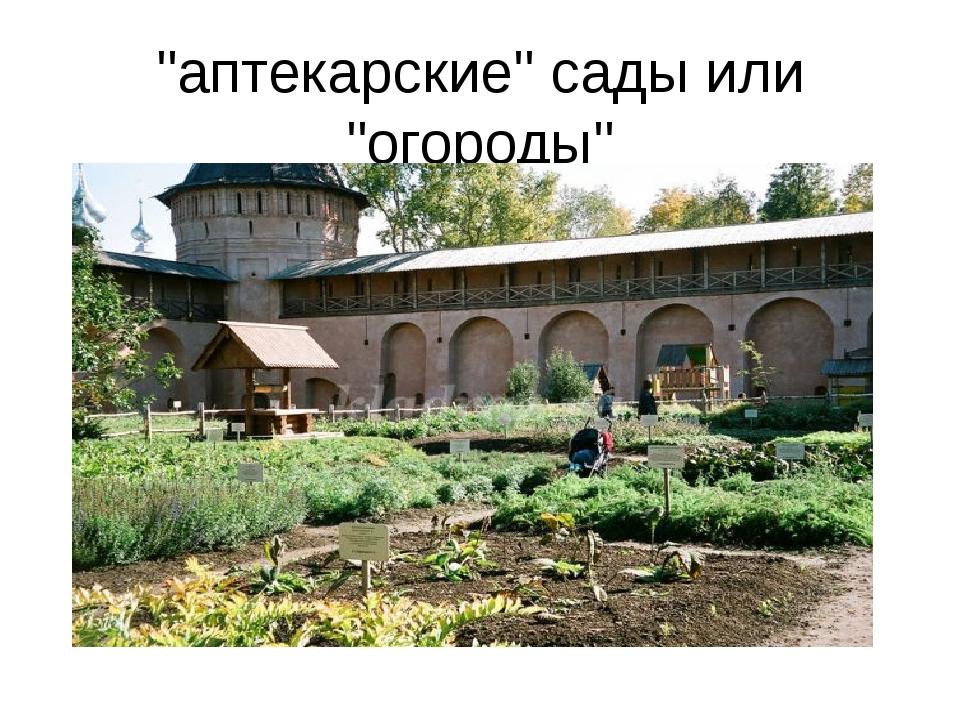 """""""аптекарские"""" сады или """"огороды"""""""