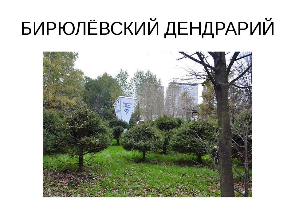БИРЮЛЁВСКИЙ ДЕНДРАРИЙ
