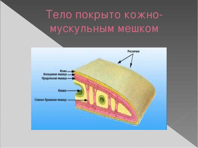 Тело покрыто кожно-мускульным мешком