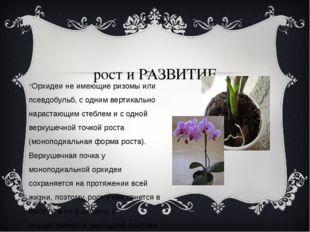 рост и РАЗВИТИЕ Орхидеи не имеющие ризомы или псевдобульб, с одним вертикаль