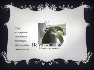 Не ухаживание Если регулярно не ухаживать и не поливать вашу орхидею, случит
