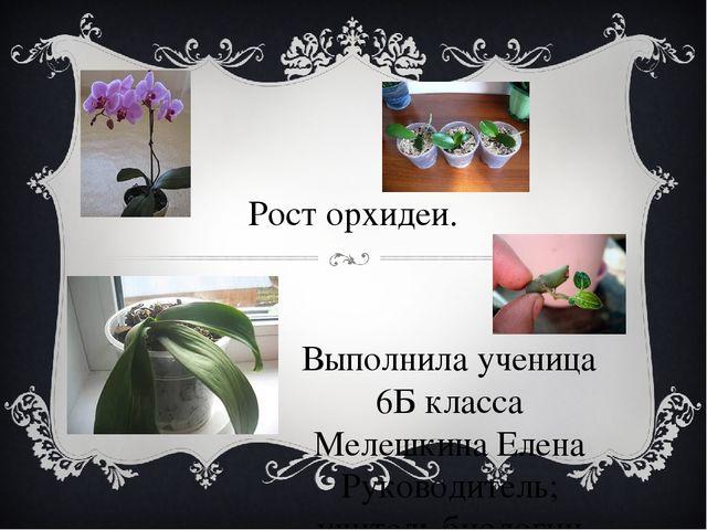Рост орхидеи. Выполнила ученица 6Б класса Мелешкина Елена Руководитель; учит...