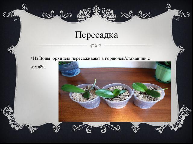Пересадка Из Воды орхидею пересаживают в горшочек/стаканчик с землёй.