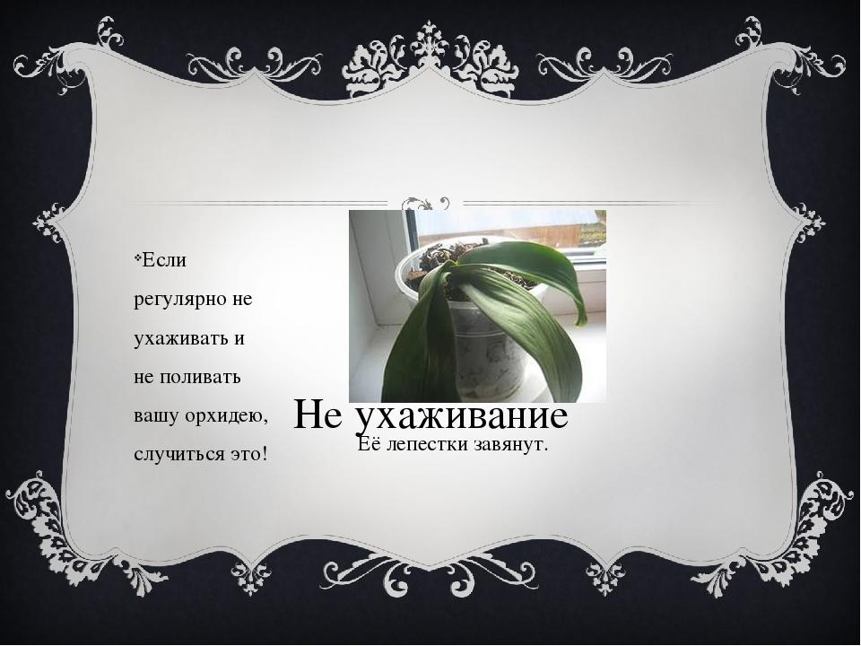 Не ухаживание Если регулярно не ухаживать и не поливать вашу орхидею, случит...