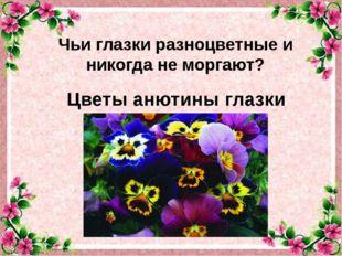 Цветы анютины глазки Чьи глазки разноцветные и никогда не моргают?