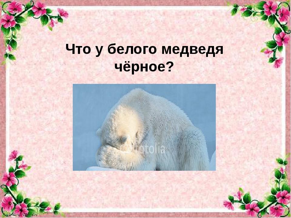 Что у белого медведя чёрное?