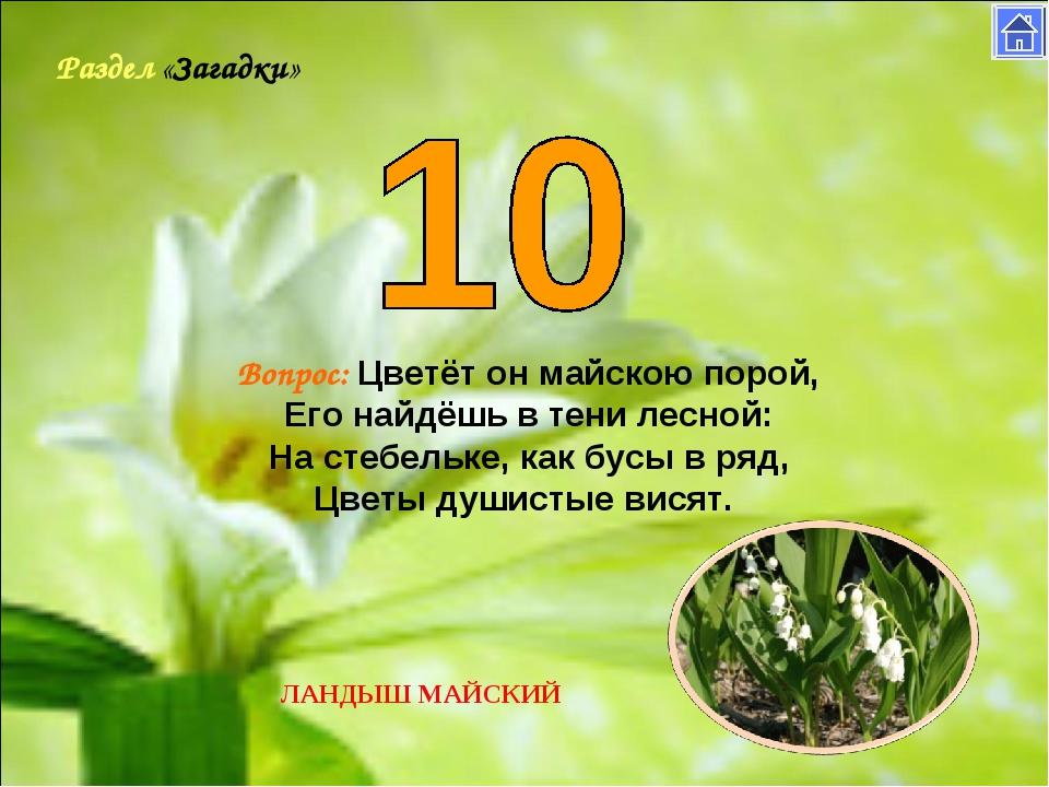 Раздел «Загадки» Вопрос: Цветёт он майскою порой, Его найдёшь в тени лесной:...