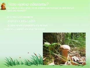 Что нужно сделать? Вы нашли в лесу гриб, но не знаете настоящий ли это белый