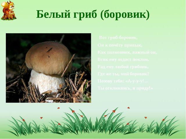 Белый гриб (боровик) Вот гриб-боровик, Он к почёту привык, Как полковник, важ...