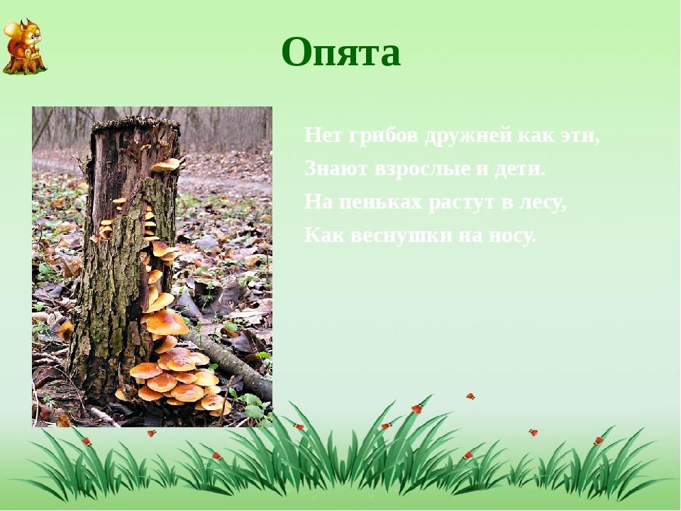 Опята Нет грибов дружней как эти, Знают взрослые и дети. На пеньках растут в...