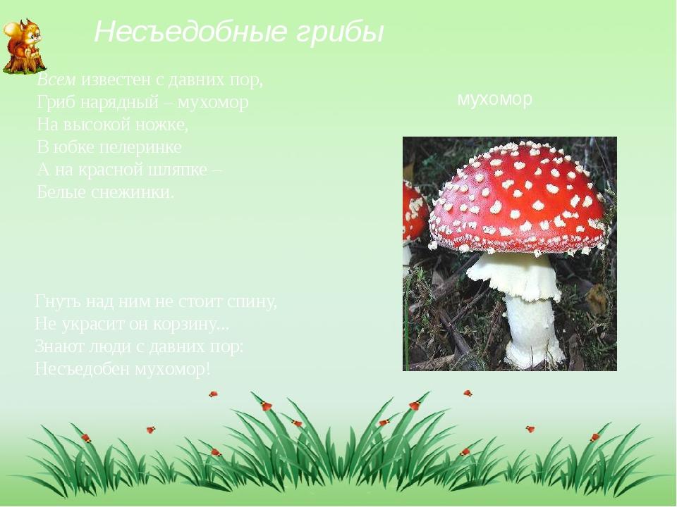 Несъедобные грибы Всем известен с давних пор, Гриб нарядный – мухомор На высо...