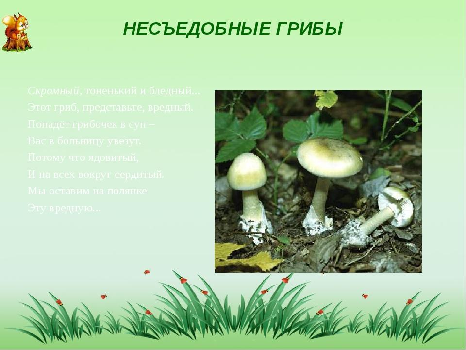 НЕСЪЕДОБНЫЕ ГРИБЫ Скромный, тоненький и бледный... Этот гриб, представьте, вр...