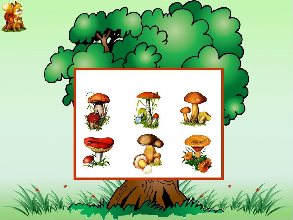 задание грибы картинки ноутбуке или