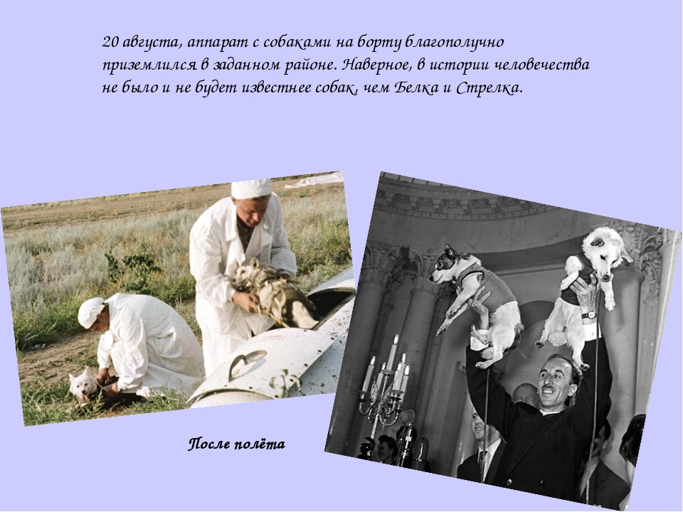20 августа, аппарат с собаками на борту благополучно приземлился в заданном р...
