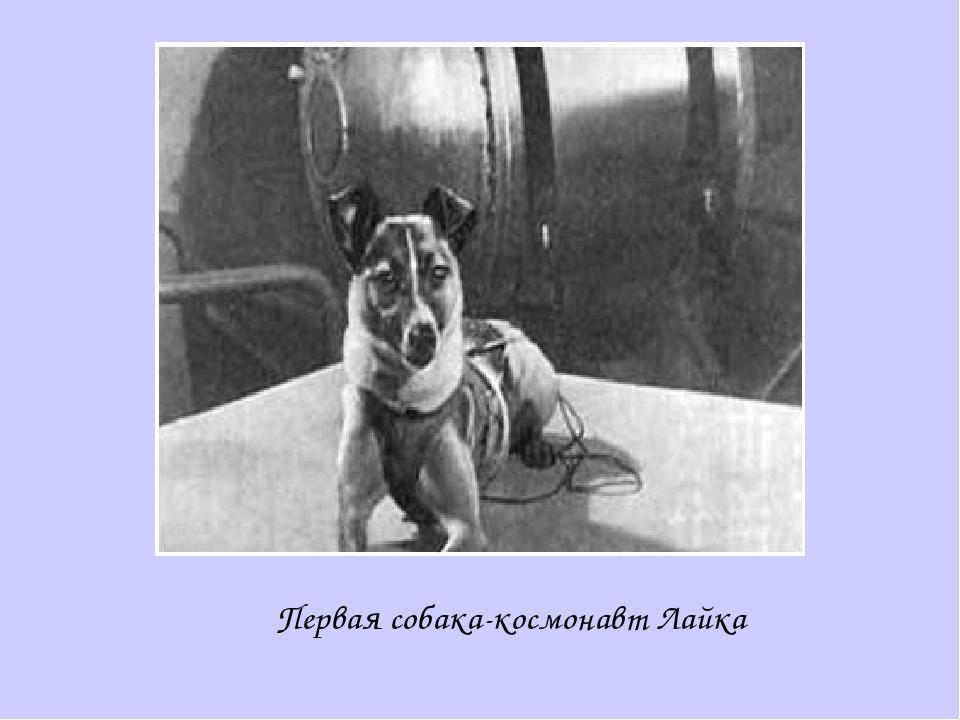 Первая собака-космонавт Лайка