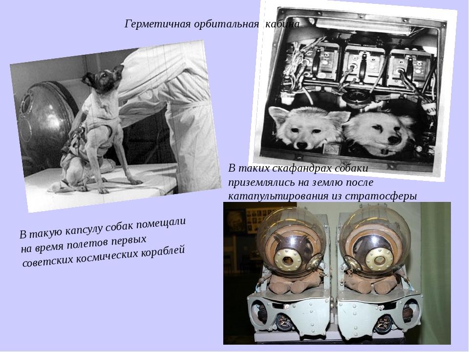 В такую капсулу собак помещали на время полетов первых советских космических...