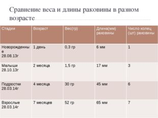 Сравнение веса и длины раковины в разном возрасте Стадии Возраст Вес(гр) Длин
