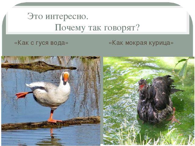 Это интересно. Почему так говорят? «Как с гуся вода» «Как мокрая курица»