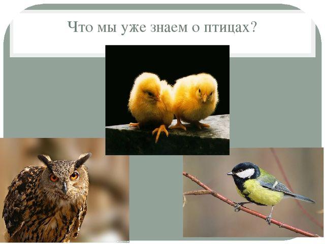 Что мы уже знаем о птицах?