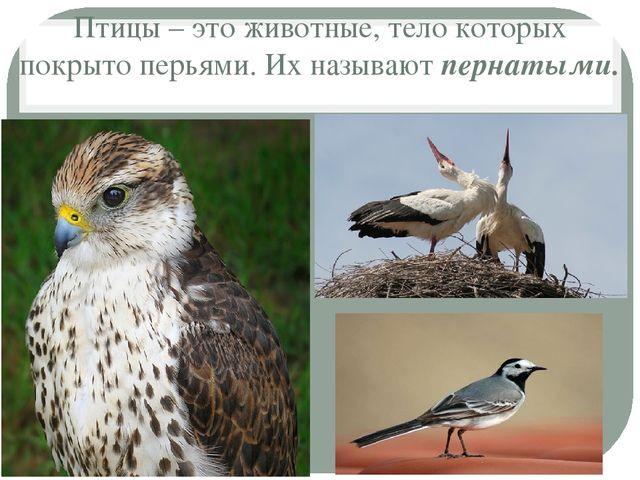 Птицы – это животные, тело которых покрыто перьями. Их называют пернатыми.