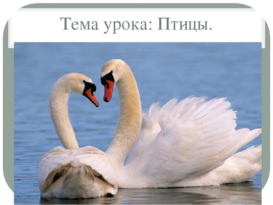Тема урока: Птицы.
